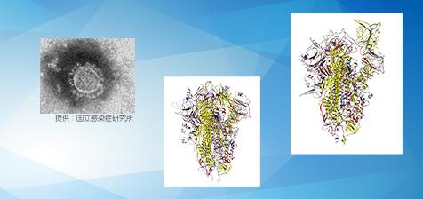 新型コロナウイルスのタンパク質のフラグメント分子軌道計算 ~「富岳」による新型コロナウイルス対策その3